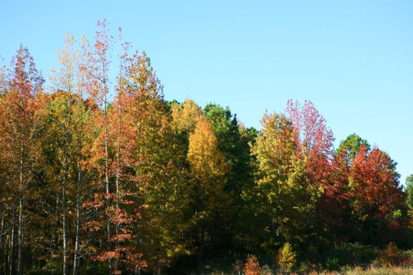 fallcolors.jpg