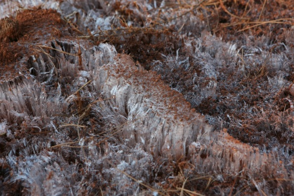 iceform1.jpg